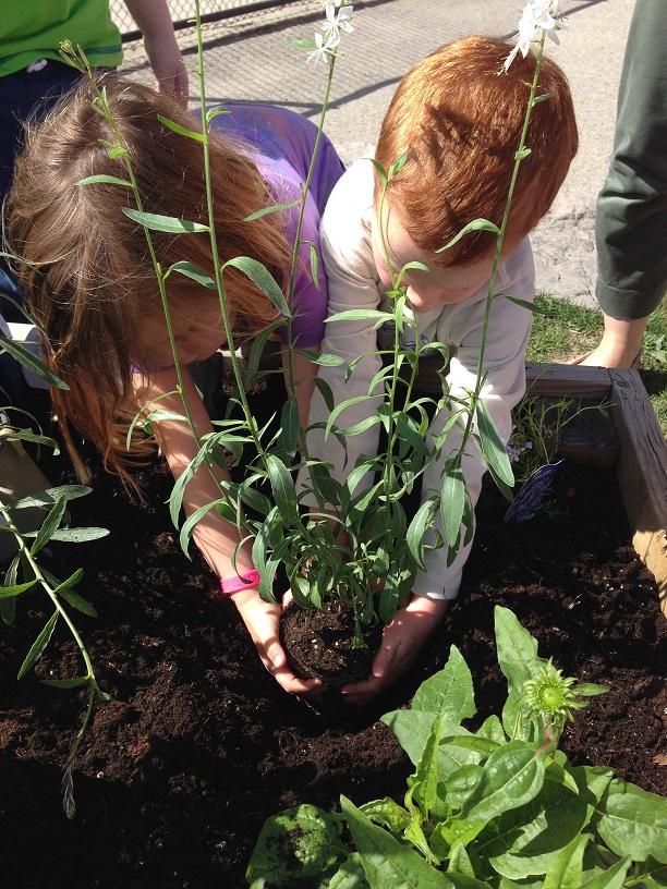 kindies planting 3