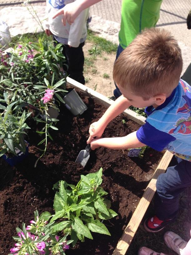 kindies planting